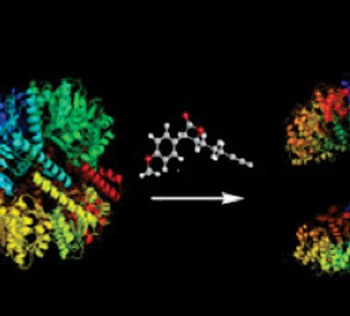 Image: Several small molecules are able to split the protease ClpP into inactive smaller units, which massively disturbs the bacterial metabolism ClpP (Photo courtesy of Technische Universitaet Muenchen).