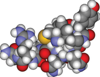Image: Space-filling model of the peptide hormone vasopressin (Photo courtesy of Wikimedia Commons).