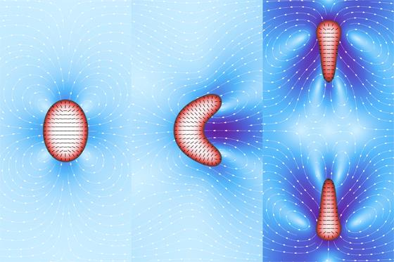 Image: Cell-like features in computer simulated active droplets: Left – static distortion; Middle – motility; Right: division (Photo courtesy of Dr. Luca Giomi and Dr. Antonio DeSimone, SISSA).