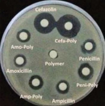 Image: Cultured bacteria showing increased sensitivity to antibiotics with the additional of a metallopolymer (Photo courtesy of University of South Carolina).