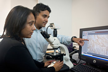 Image: Arup and Gitali Indra are beginning to find clues to predicting, preventing and stopping melanoma before it spreads (Photo courtesy of Karl Maasdam / Oregon State University College of Pharmacy).
