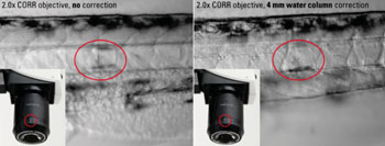 Image: Studying Vascular Development using Zebrafish (somites). Left: without correction. Right: optics adapted to the refractive index of the water column by using the correction ring of the Leica Planapo 2.0x CORR objective (Photo courtesy of Mailin J. Hamm, angiogenesis laboratory, University of Muenster, Germany).