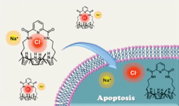 Image: Synthetic ion transporters can induce apoptosis by facilitating chloride anion transport into cells (Photo courtesy of the University of Texas, Austin).