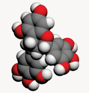 Image: Space-filling molecular model of epigallocatechin gallate (EGCG)(Photo courtesy of Wikimedia Commons).