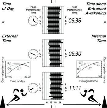 Image:  Graphical summary of a new study showing that athletic performance (and therefore sport event outcome) also depends on the circadian rhythms of individual athletes (Photo courtesy of University of Birmingham and Cell Press).