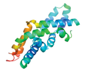 Image: Molecular model of the protein Saposin C (Photo courtesy of Wikimedia Commons).