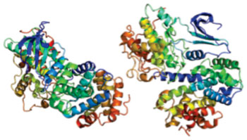 Image: Structure of the CCNA2 (cyclin A2) protein (Photo courtesy of Wikimedia Commons).