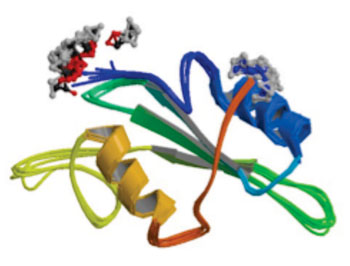 Image: Molecular model of IL2 inducible T-cell kinase (ITK) enzyme (Photo courtesy of Wikimedia Commons).