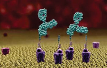 Image: Alphamers (purple) act as homing beacons, attracting pre-existing anti-alpha-Gal antibodies (green) to the bacterial surface (Photo courtesy of Altermune Technologies).