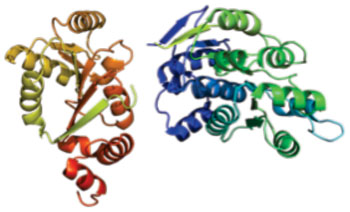 Image: Structure of the DDX3X protein (Photo courtesy of Wikimedia Commons).
