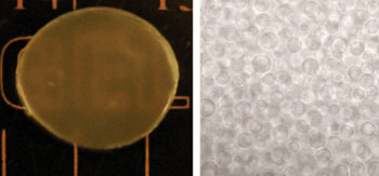 Image: Photograph (left) and optical microscopic (right) images of the new hydrogels with polyethylene glycol (PEG) microstructures developed to enable burst-free sustained-release of PEGylated protein drugs such as PEGylated interferon (Photo courtesy of A*STAR's Institute of Bioengineering and Nanotechnology).