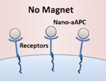 Image: Nanoscale artificial antigen presenting cells (nano-aAPCs) bound to receptors on the T-cell surface (Photo courtesy of Dr. Karlo Perica, Johns Hopkins University).