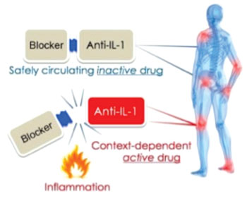 Image: The non-active drug is activated when it becomes localized at a site with excessive inflammation (Photo courtesy of Ben-Gurion University of the Negev).