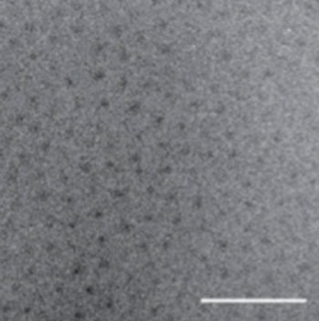 Image: Transmission electron micrograph (TEM) of the newly repackaged pharmaceutical. The dark spots are the water-insoluble cores of the nanoparticles, while the peptide chains are barely visible due to their low electron density and high degree of hydration (Photo courtesy of Dr. Ashutosh Chilkoti, Duke University).
