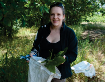Image: Research headed by Emory University ethnobotanist Dr. Cassandra Quave, shown collecting chestnut leaves in Italy, was inspired by traditional folk remedies (Photo courtesy of Marco Caputo).