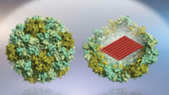 Image: Virus-protein-coated DNA origami nanostructures. With the help of protein encapsulation, such nanostructures can be transported into human cells much more efficiently (Photo courtesy of Dr. Veikko Linko and Dr. Mauri Kostiainen, Aalto University).