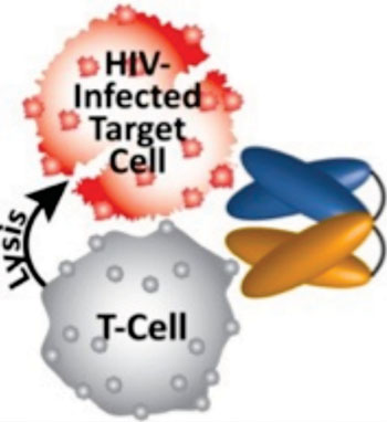 Image: Schematic representation of HIV DART binding to two distinct antigens simultaneously, redirecting the killer T-cells to destroy HIV-1 infected cells (Photo courtesy of Duke University).