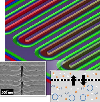 Image: Section of a serpentine channel reactor shows the parallel reactor and feeder channels separated by a nanoporous membrane. At left is a single nanopore viewed from the side; at right is a diagram of metabolite exchange across the membrane (Photo courtesy of the Oak Ridge [US] National Laboratory).