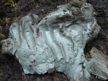 Image: Naturally occurring clay from Kisameet Bay, Canada, exhibits potent antibacterial activity against multidrug-resistant pathogens (Photo courtesy of Kisameet Glacial Clay Inc.).