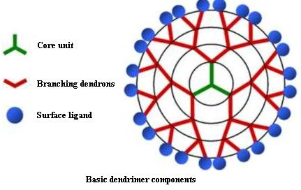 Image: Schematic diagram of dendrimer structure (Photo courtesy of the University of California, Irvine).