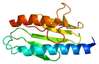 Image: Structure of normal frataxin (FXN) protein (Photo courtesy of Wikimedia Commons).