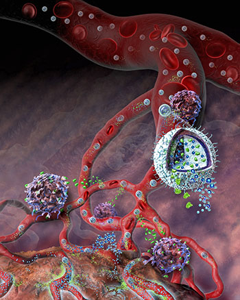 Image: A cutaway illustration of the nanogel drug delivery system. The small particle can carry multiple drug agents to a specific target, such as the site of a tumor (Photo courtesy of Nicolle Rager Fuller, [US] National Science Foundation).